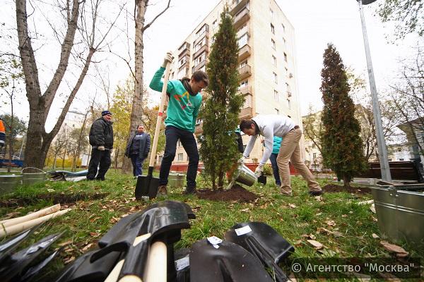 Активные граждане выбрали деревья для озеленения своих дворов